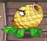 Pineapple4