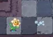 Narcissus1