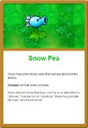 Snow Pea Online