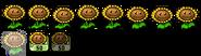 SunflowerAssetsDS