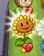 Sunflower Got Sun Heroes