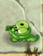 Sling Pea About Attacking