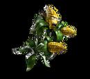 Зерновая Кукуруза