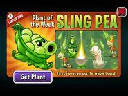 PlantoftheWeekSlingPea