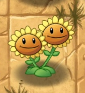 Twin Sunflowere