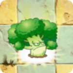 Vigorous Broccoli PF1