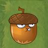 HazelnutAS