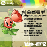 Tulip Trumpeter Announcement Pic 1