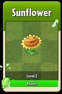 Sunflower Level Up