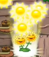 Sun sun sun sun 250 sun