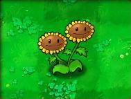Twin-Sunflower