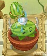 65-Melonpulta regado