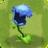 Hydrangea3