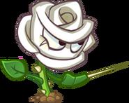 RoseswordmanEvo1