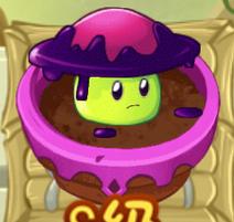 Sepsis Mushroom ZG