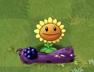 BlastberrySunflower