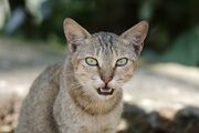 1024px-Domestic Cat Face Shot