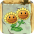 Twin Sunflower2