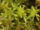 Re-Peat Moss