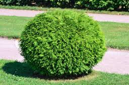 File:A small bush.png