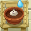 Tiny Thirsty Garlic