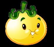 Solar tomato