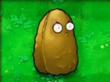 Tall-nut (PvZ)