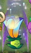 Shielded Moon Flower