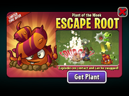 Escape Root Plant of the Week