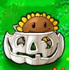 Sunflower Imitater pumpkin