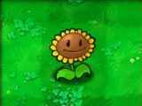 Sunflower (PvZ)