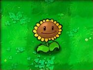 Sunflower-Almanac