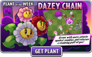 Dazey Chain Plant of the Week