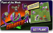 Plant of the week chomper ad