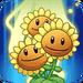 Sunflower line Ability3