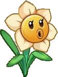 Narcissus hd