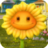 SunflowerGW1