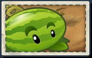Melonpulta paquete semillas