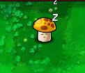 SleepingSun-shroom