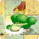 Vigorous Broccoli PF2