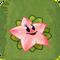 Angel Starfruit2