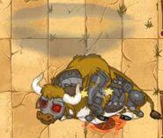 Bull6