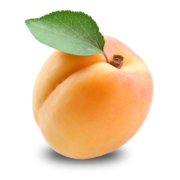 Apricot PNG12652