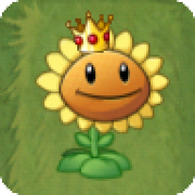 Crowned Sunflower
