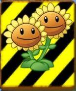 EndangeredTwinSunflower2