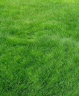 Grass(real)