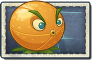 Citron New Far Future Seed Packet
