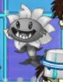 GreyPrimalSunflower