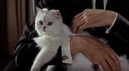 James-Bond-cat