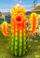 Fire Cactus
